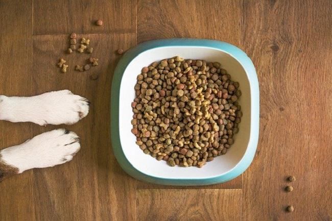 Alimentación especial para el perro ¿Cuándo y por qué?