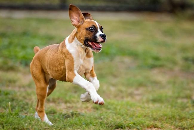 ¿Cómo lidiar con un perro agitado y juguetón?