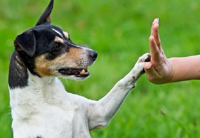 ¿Cómo adiestrar a mi perro?