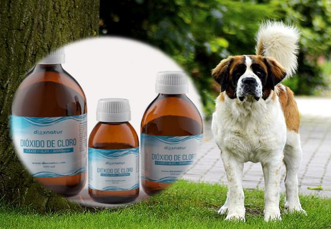 Dióxido de cloro para perros: uso, dosis y protocolo