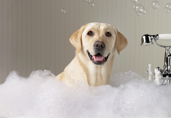 higiene de un perro en casa